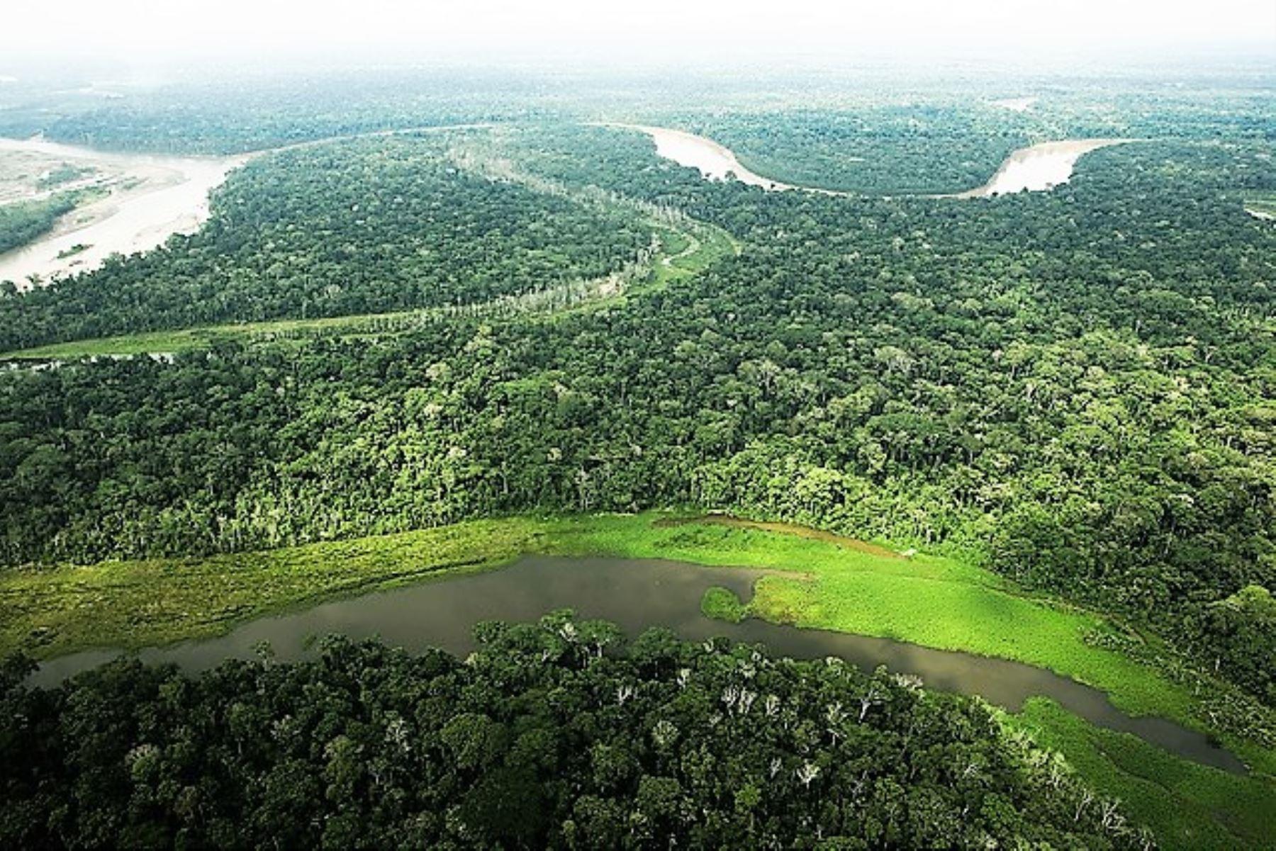 Audiencia en contra de las concesiones forestales en territorios asignados a los pueblos en aislamiento voluntario
