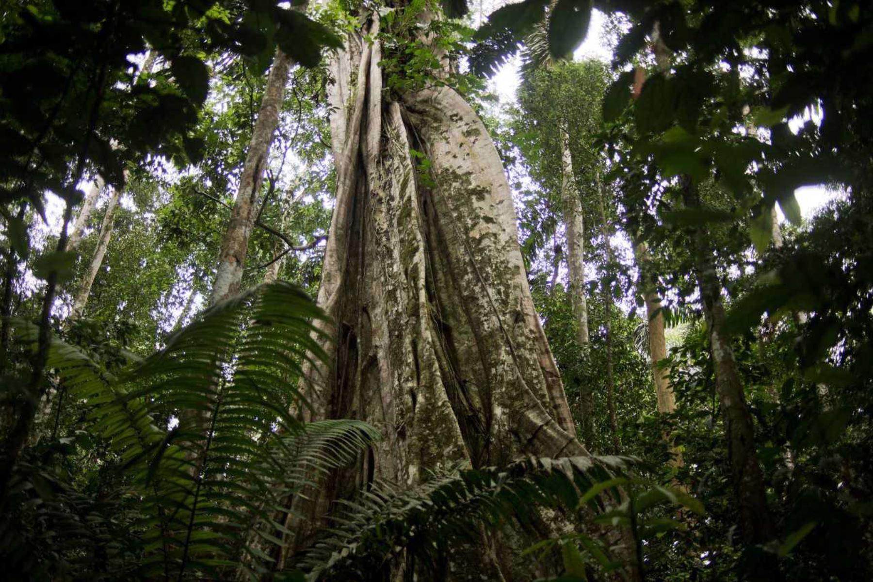 Gobierno Regional de Loreto viola la ley y otorga concesiones forestales en territorios de pueblos indígenas en aislamiento voluntario