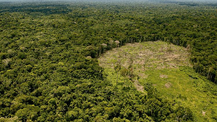 Derogan ley que promovía el tráfico de tierras y deforestación en Ucayali