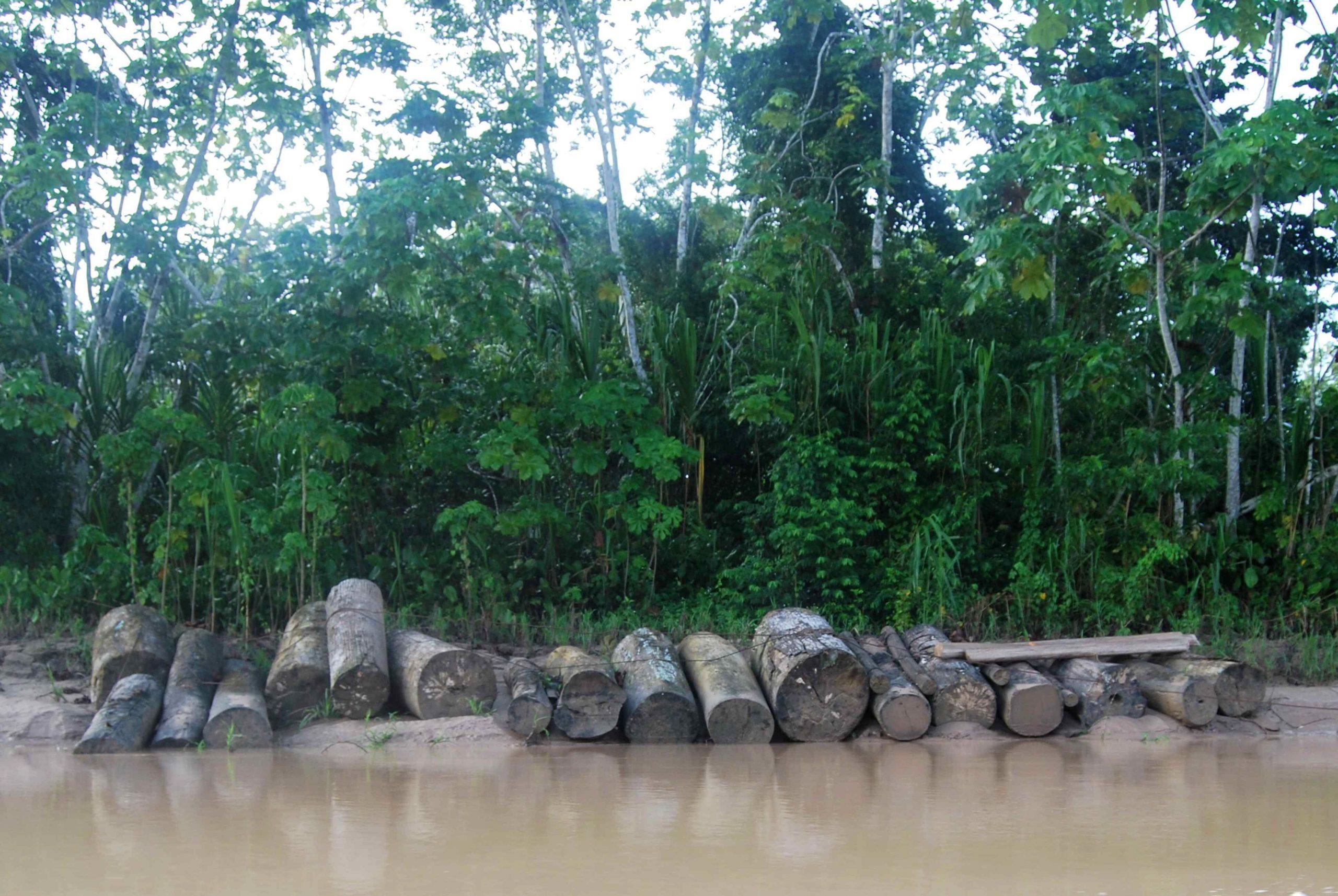Defensoría del Pueblo exige cumplimiento de Ley Forestal al Gobierno Regional de Loreto