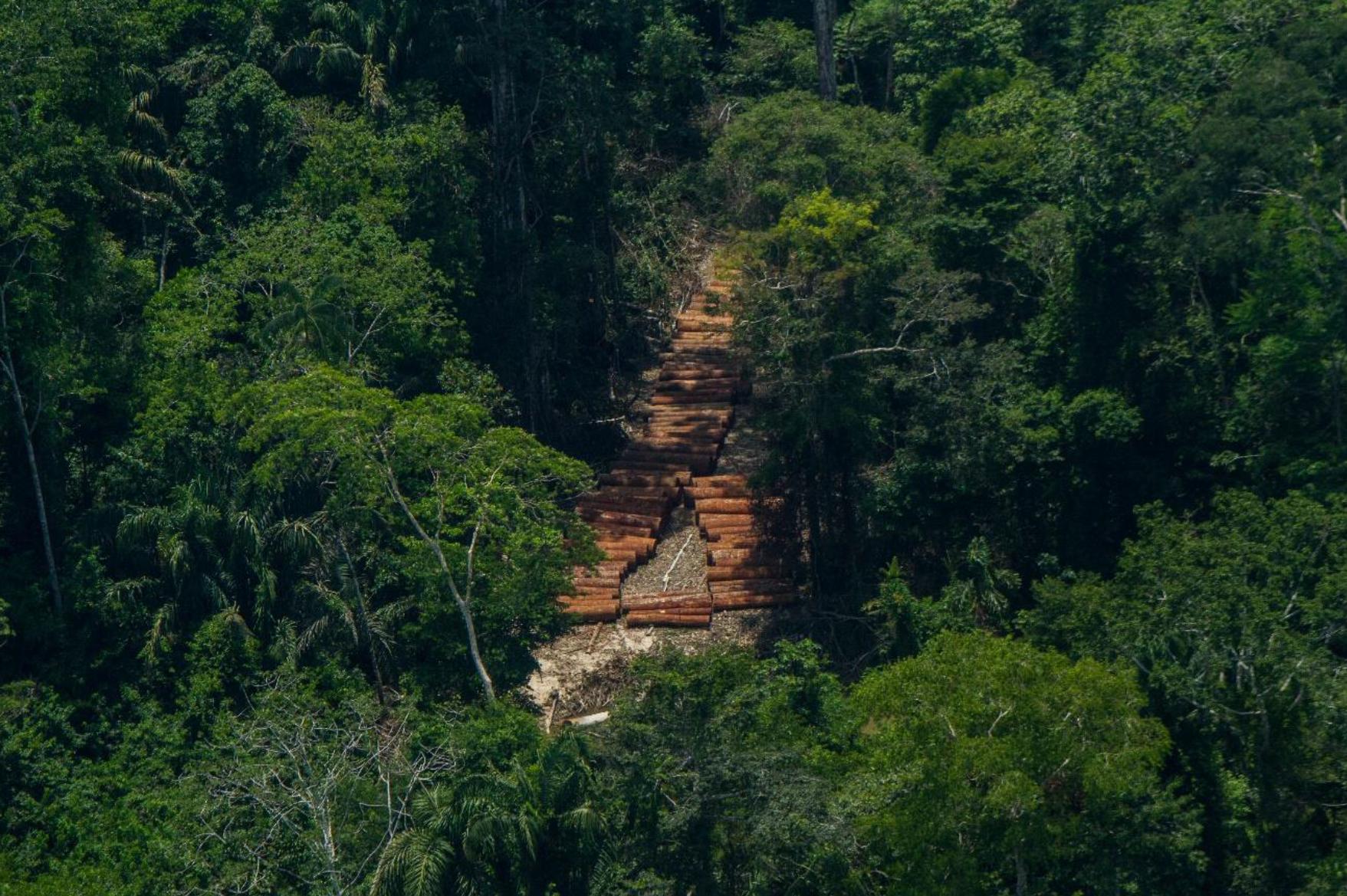 Demanda de amparo contra la reactivación económica en el sector forestal para proteger a los pueblos en aislamiento