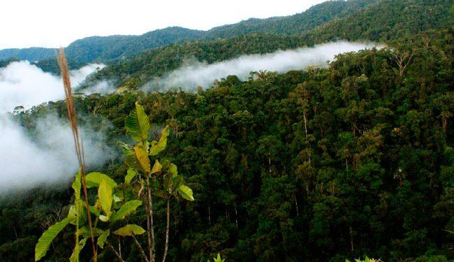 Cordillera del Cóndor reconocida como territorio ancestral de pueblos Awajún y Wampis