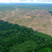 Convocan audiencia contra empresa palmicultora por grave caso de deforestación en la Amazonía peruana