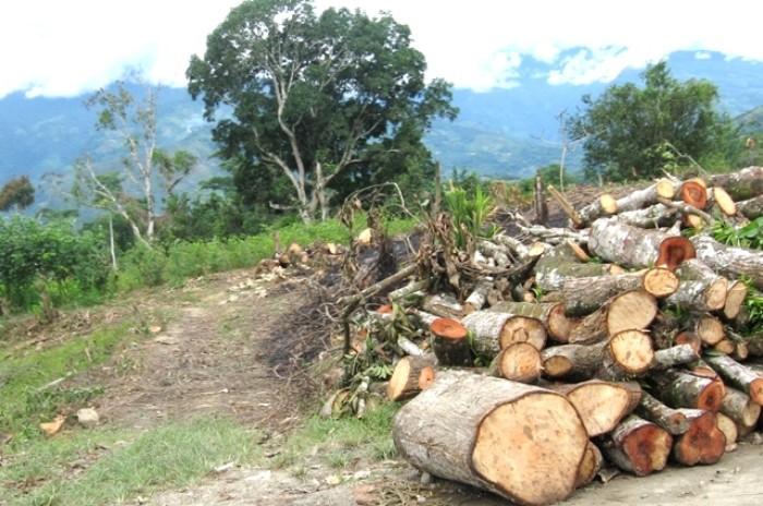 TC abandona comunidad nativa ashaninka atacada por madereros ilegales