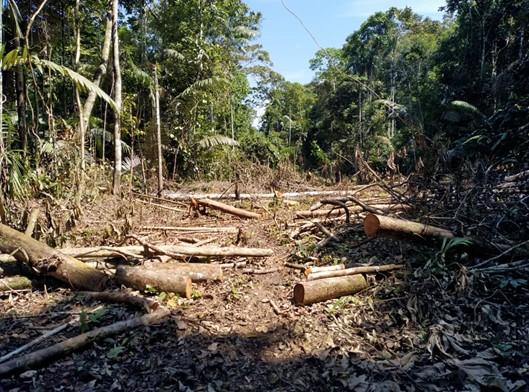 Presentan Acción de Amparo para detener el avance de la construcción de la carretera ilegal LO 105, Genaro Herrera – Colonia Angamos (Loreto), que atenta contra los derechos de los Pueblos Indígenas Aislados y la Amazonía